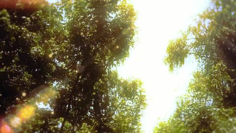 Enchanted Eerie Trees - 4 Animation