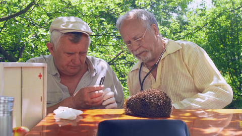 retired doctors examine hedgehog with magnifying glass Live Action