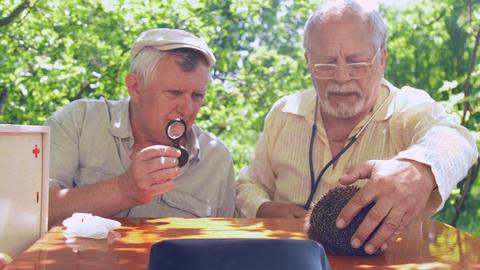 aged people look at hedgehog on brown wooden table Footage