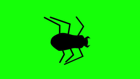 Flat style Halloween beetle walking against a green background. Seamless loop Animation