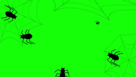 Halloween Spider and Web animation on a green background. Flat style animation background Animation