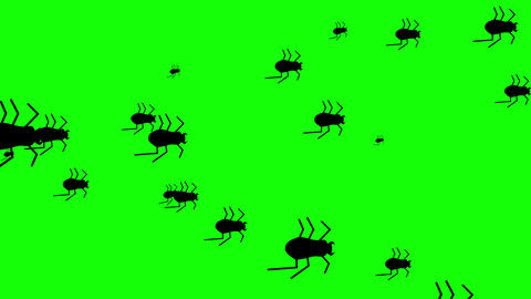 Hordes of Creepy Flat Style Halloween beetles running against a green background. 4k Animation