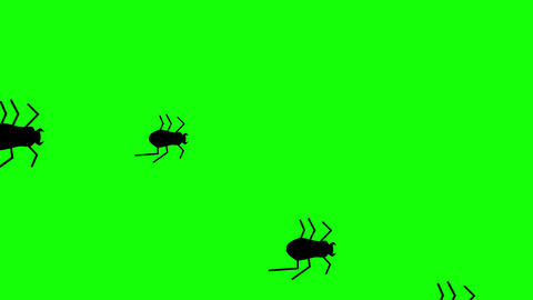 Hordes of Creepy Flat Style Halloween beetles running against a green background. 4k Videos animados