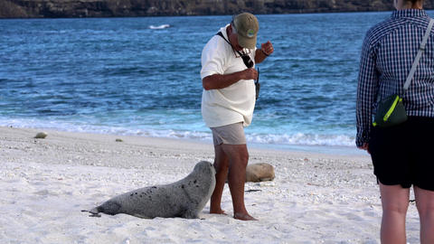 Galapagos, Ecuador - 2019-06-20 - baby sea lion chases guide Live Action