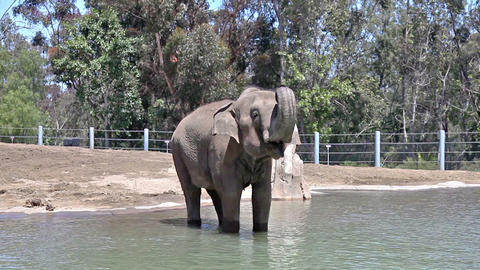 Elephant in water in the zoo Stock Video Footage