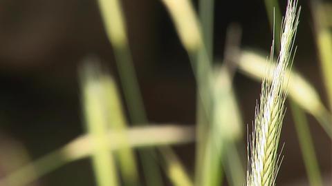 field grass a Stock Video Footage