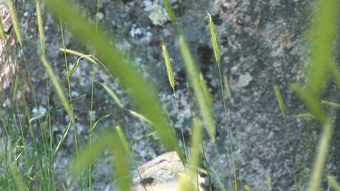 field grass c Stock Video Footage