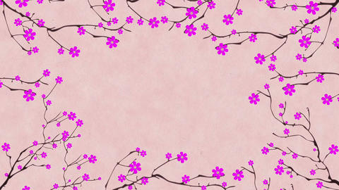 Cherry Blossoming 1 Stock Video Footage