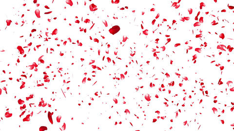 Falling Sakura Petals Cherry Blossoms 5 red Animation