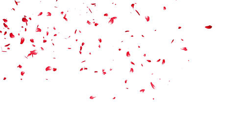 Falling Sakura Petals Cherry Blossoms 6 red Stock Video Footage