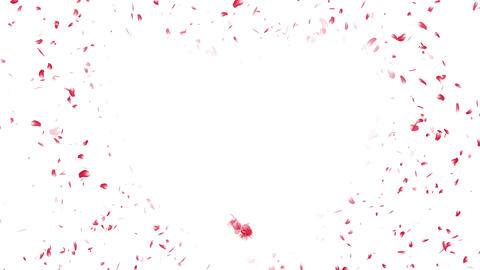 Heart Cherry Blossoms Red 1 Stock Video Footage