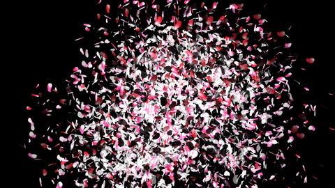 Sakura Cherry Blossoms Japanese 5 alpha Stock Video Footage