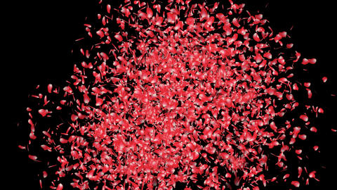 Sakura Cherry Blossoms Japanese Red 4 alpha Stock Video Footage