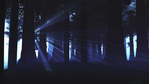 Supernatural Forest Lightrays 4 Stock Video Footage