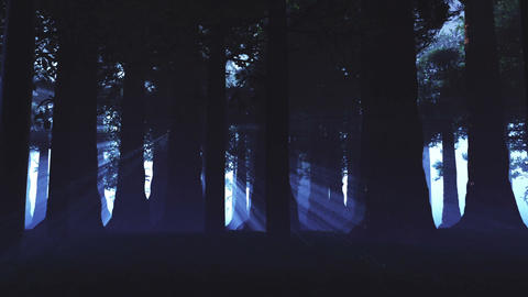 Supernatural Forest Lightrays 4 Animation