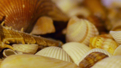 Shells Stock Video Footage