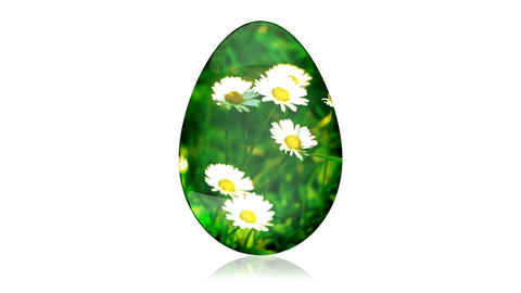 Glass Easter Egg with Camomiles Stock Video Footage