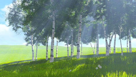Birch grove edge at sunny spring day 4K Footage