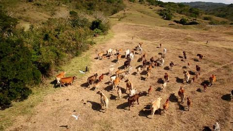 天行見 空中視覺整合服務 - 屏東牛群 ビデオ
