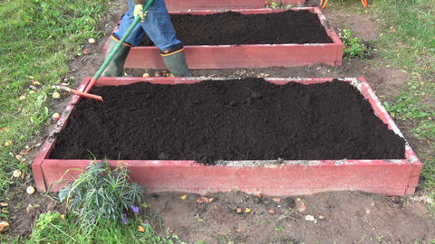 raking mould humus in wooden raised flower bed Live Action