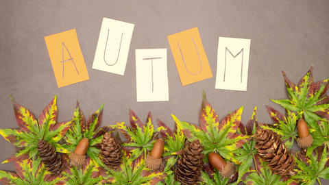 Stop motion of autumn title appearing above group of leaves and pine cones CG動画
