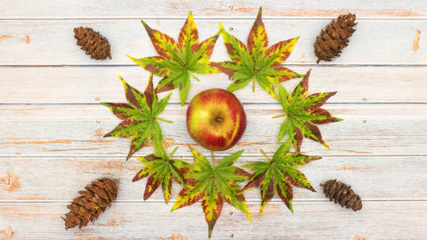 Dance of leaves, pine cones and apple on the wooden table - Stop motion Animation