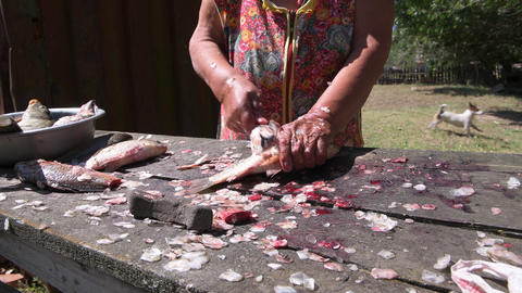 Older female fisherman cleans the scales of a lively big fish Footage
