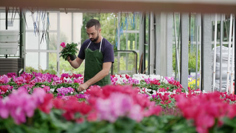 Young Man Working As Florist In Flower Shop With Flowers Live Action