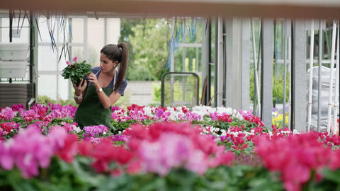 Young Woman Working As Florist In Flower Shop With Plants Footage