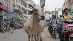 Cow stands on street between traffic,Allahabad,India Footage