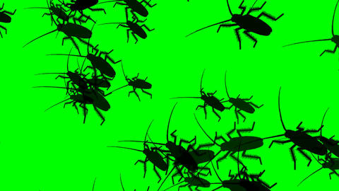 23 animated cockroaches on green sceen background Animation