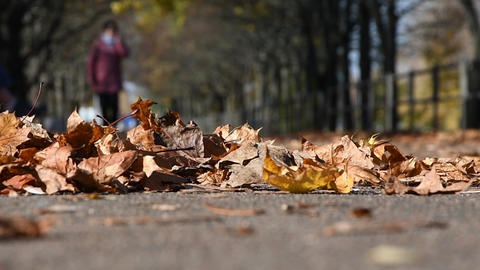 ellow dry maple leaves lie on the asphalt path, the wind drives the leaves, in the background a man Footage