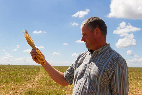 country man in the stubble of the corn crop Photo