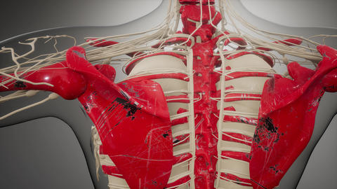 Transparent Human Body with Visible Bones Live Action