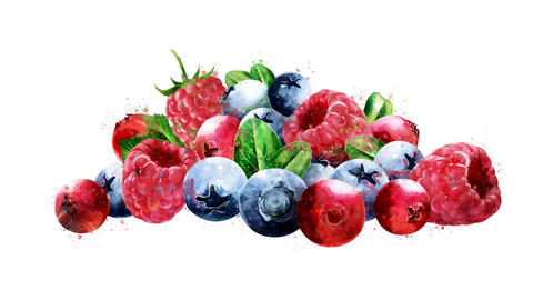 Watercolor appearance animation of the raspberries, cranberries and blueberries CG動画