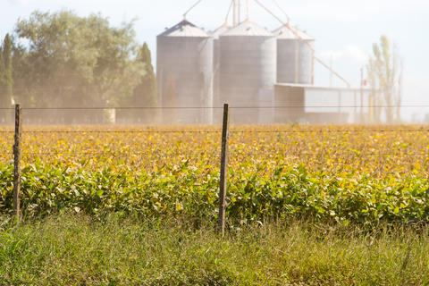 Soybean plantation in the field with defocused silos in the background Photo