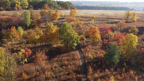 Drone view of sunny autumn field and forest illuminated with sunset light Live Action