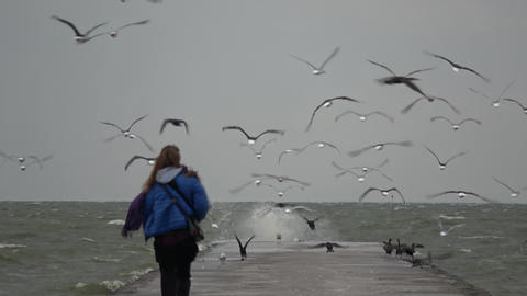 Happy young girl woman scaring the sea birds on pier Live Action