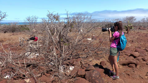 Bird photographer taking pictures of Frigatebirds birds - Galapagos tourist Live Action