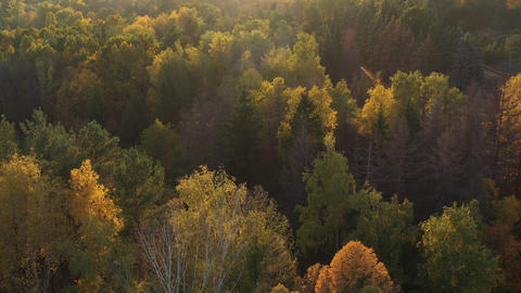 Epic aerial flight over the autumn forest at sunset. Aesthetics of autumn nature Footage