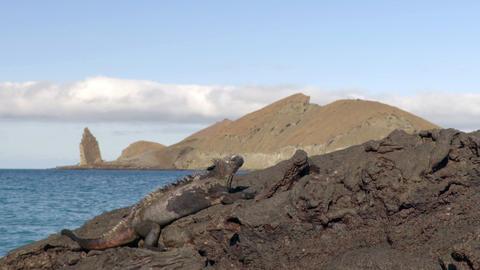 Galapagos Islands tourist destination icon Pinnacle Rock and Marine Iguana Live Action