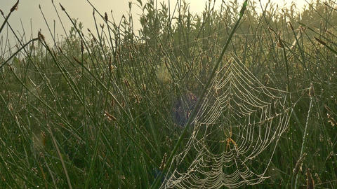 Misty morning on a lawn with coastal grass covered with cobweb GIF