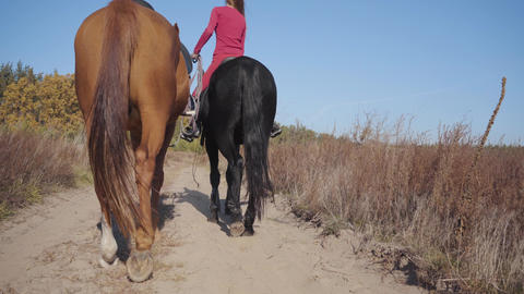 Back view of two graceful horses walking along dirt road. Professional Caucasian Live Action