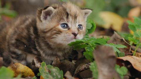 Homeless tabby kitten outside Live Action