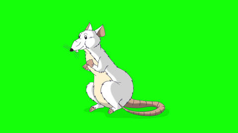 The white rat crawls out and then hides back animation Chroma Key Videos animados