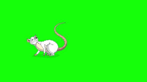 White rat falls asleep and wakes up animation Chroma Key Videos animados