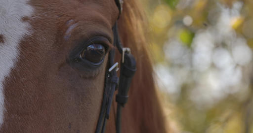 Extreme close-up of the eye of brown horse with white... Stock Video Footage