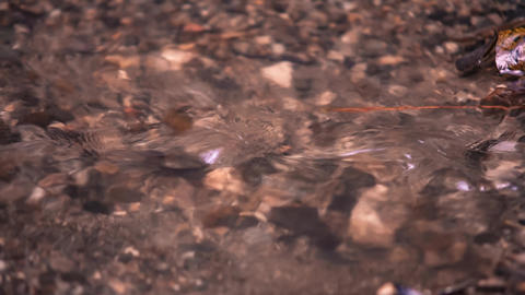 Water stream of the creek Live Action