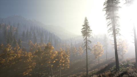 Calm moody forest in misty fog in the morning Footage