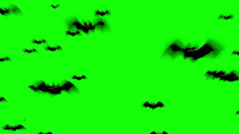 Swarm of Halloween bats flying against green background. Spooky Halloween animated background Animation